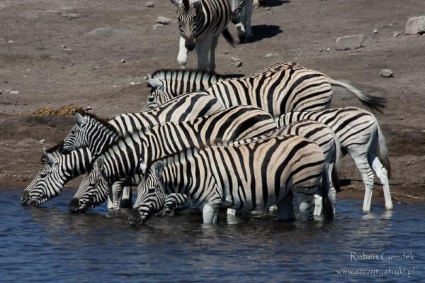 Zdjęcia z Namibii