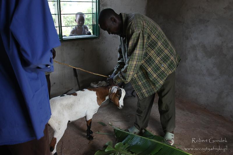 Ceremonia dzielenia kozy w Tanzanii