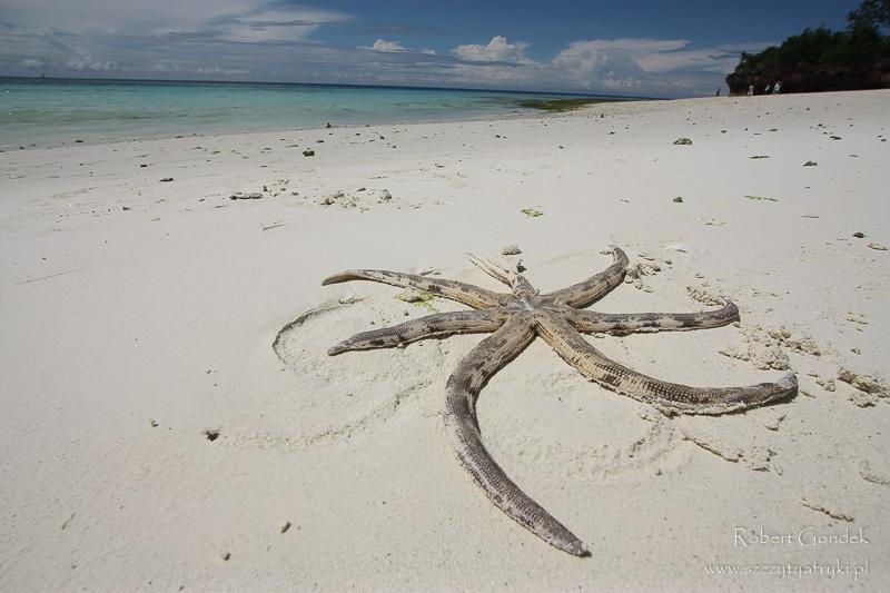 Na plaży Zanzibaru