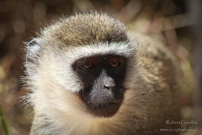 W Nairobi National Park