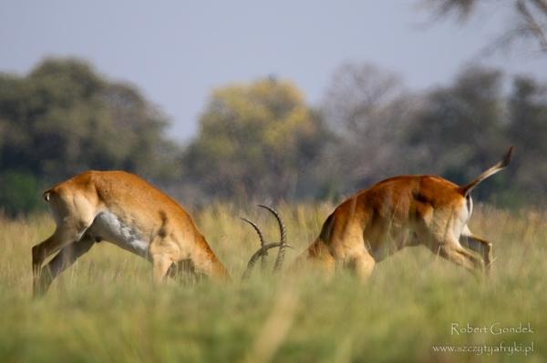 Zdjęcia z Botswany