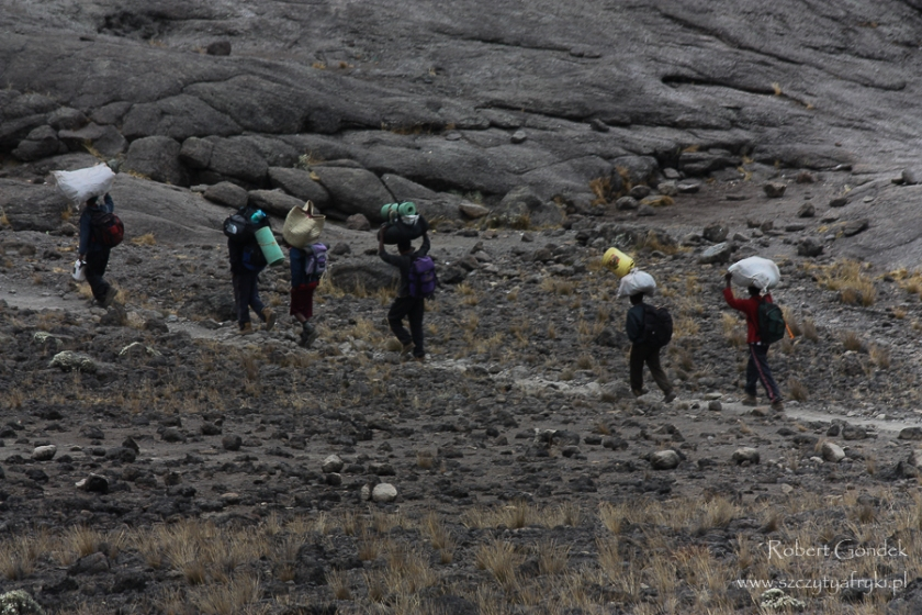 Tragarze w drodze na Kilimandżaro