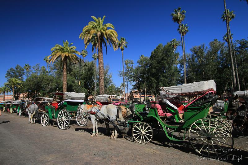 Maroko - Dorożki w Marrakeszu