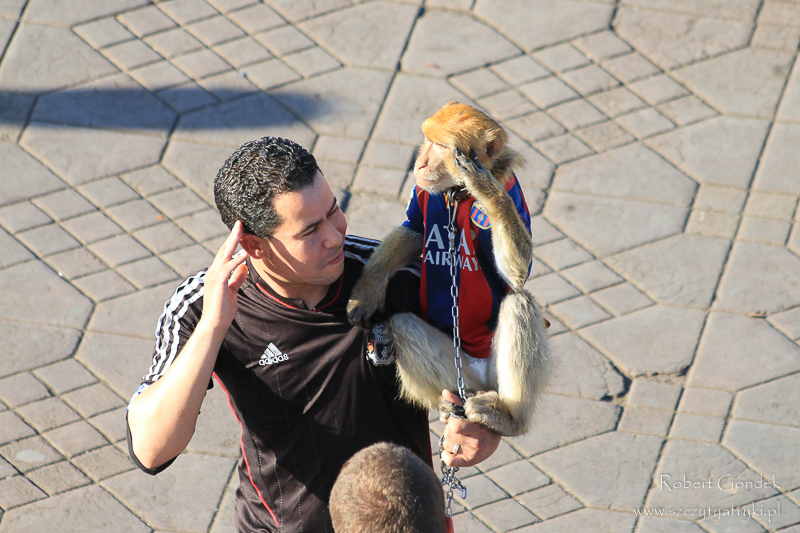 Maroko - Małpy na placu Dżemaa el-Fna
