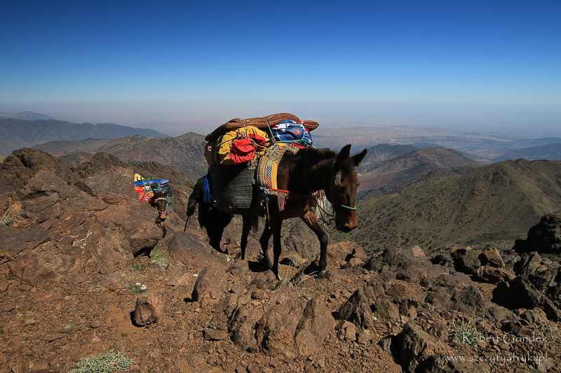 Maroko - Muł w górach Atlas
