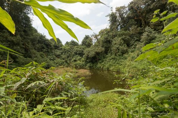 Red Lake - jedno z jezior w zielonych zalesionych kraterach lasu deszczowego u podnóża Mount Cameroon