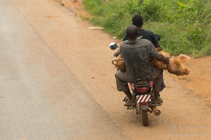 Świnia w drodze