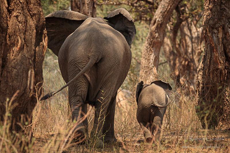 Zwierzęta w Zimbabwe